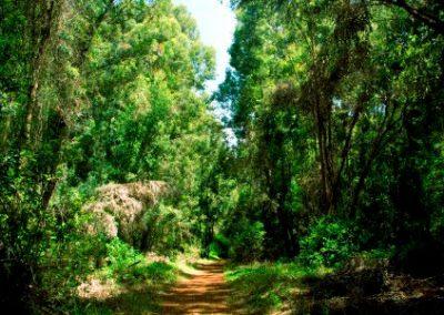 nairobi_karura_forest