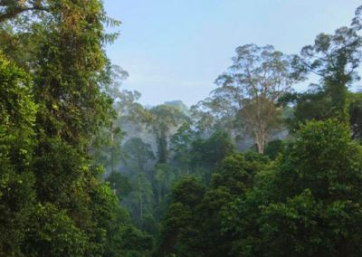 tropical_and_subtropical_moist_broadleaf_forests_1