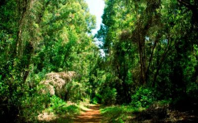 Kenya's forest cover